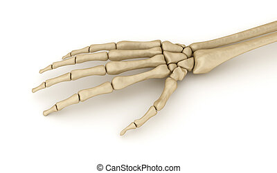 Human wrist skeletal anatomy. Medically accurate 3D...