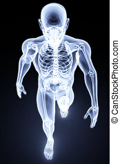 human xray - walking man under X-rays. 3d render.