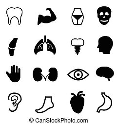 humano, órganos