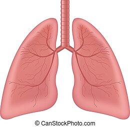 humano, aislado, órgano, plano de fondo, interno, pulmones, blanco