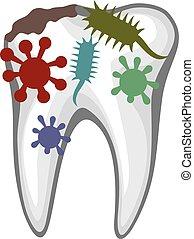 humano, diente, con, caries, y, bacteri