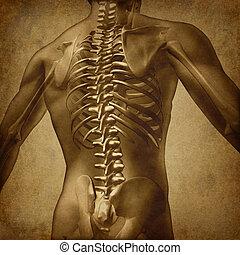 humano, grunge, espalda, textura