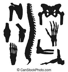 humano, medicina, huesos, articulaciones, ortopédico