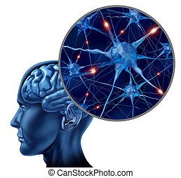 humano, neurons, activo