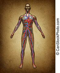humano, sangre, circulación, grunge