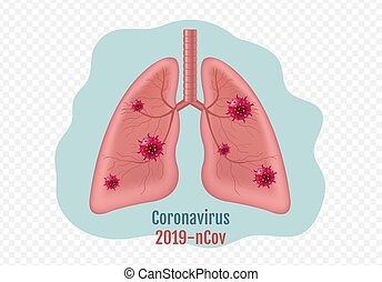 humano, transparente, aislado, coronavirus, órgano, plano de fondo, interno, pulmones