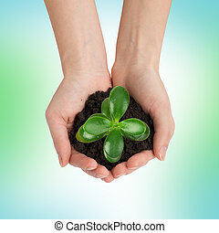 Humans hands holding green plant with ground
