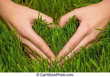 Human's hands making heart symbol on a fresh grass