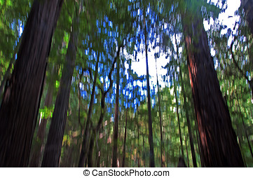 Humbolt Redwood State Park - A beautiful day in the fall at...