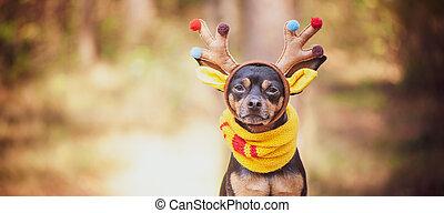 humeur, fantastique, chiens, chien, cerf, déguisement, automne
