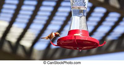 Humminbird at a Feeder