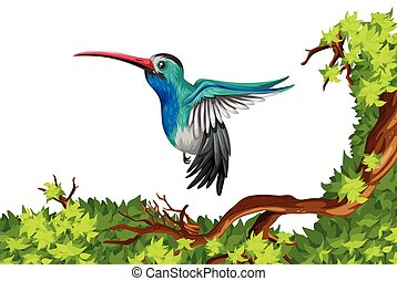 Humming bird flying on the branch