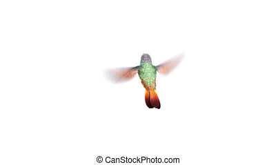 Humming bird, three 3d animations. alpha-channel is integrated into the footage, you can easily change the background. see more animations in my portfolio (just dublicate bird layer if you want to make the wings more sharp)