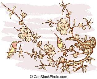 Humming-birds o a branch