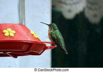 Hummingbird 1542