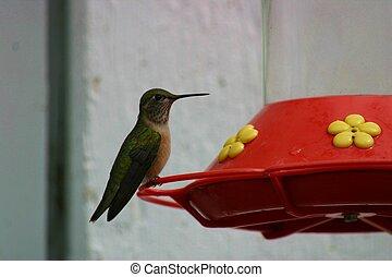 Hummingbird 1553