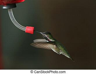 Hummingbird - 2