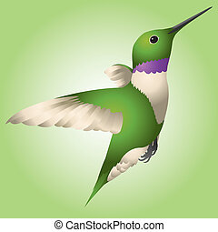 Hummingbird - A green and purple hummingbird flitting around...