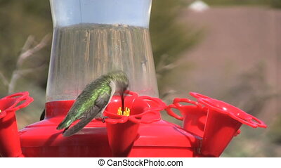 Hummingbird - a hummingbird at a backyard feeder