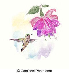 Hummingbird and fuchsia Flower watercolor