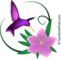 Hummingbird and lily, isolated on white