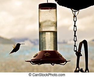 Hummingbird Approaches Feeder 3