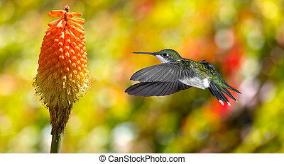 Hummingbird (archilochus colubris) in flight with tropical flower over yellow background