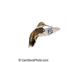 Hummingbird carrying a gift.