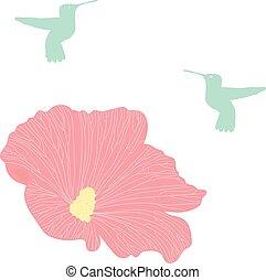 Hummingbird, Colibri, Vector Collection of Bird Silhouettes.