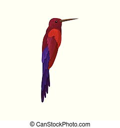 Hummingbird, colibri with bright colorful plumage vector Illustration on a white background