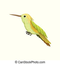 Hummingbird, colibri with bright plumage vector Illustration on a white background