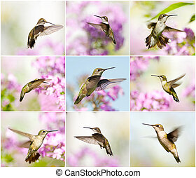 hummingbird, collage.