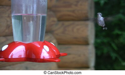 Hummingbird. Competition.