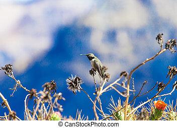 Hummingbird feeding on flower