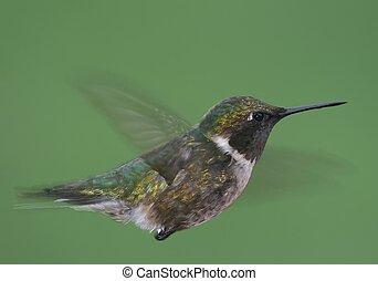Hummingbird floating