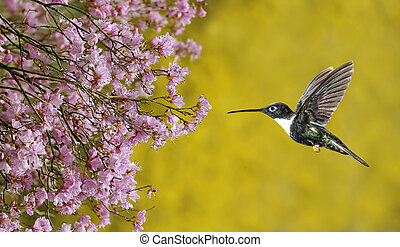 Hummingbird hover in mid-air in the garden panoramic view