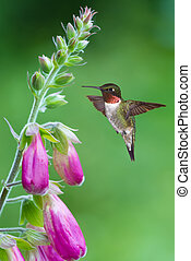 Hummingbird hover in mid-air in the garden vertical image