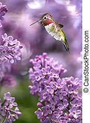 Hummingbird hover in mid-air vertical image