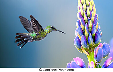 Hummingbird hovering at a flower over blue background