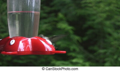 Hummingbird hovers and sits.