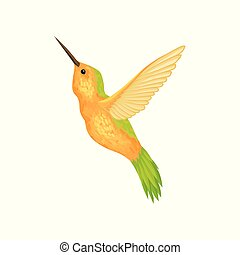 Hummingbird i with bright plumage vector Illustration on a white background