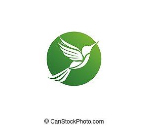 Hummingbird icon logo and symbols template vector