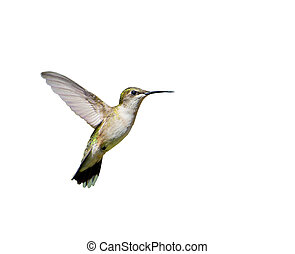 Hummingbird in motion, isolated.