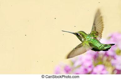 Hummingbird in sprinkler.