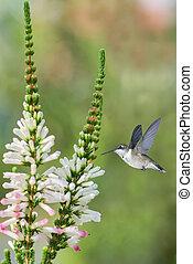 Hummingbird in the garden vertical image