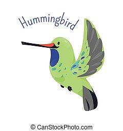 Hummingbird isolated on white background