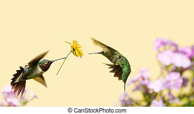 Hummingbird love.