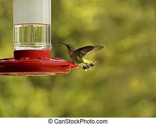 hummingbird, na, przedimek określony przed rzeczownikami, dozownik