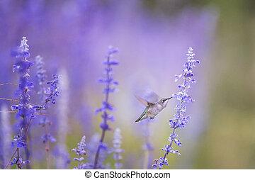 Hummingbird on Purple
