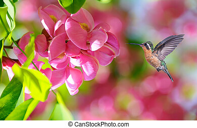 Hummingbird over blurred pink tropical flowers in background
